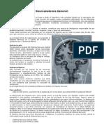 neuroanatomia_basica