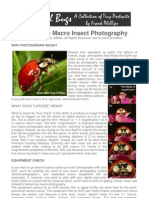 How to Do Macro Insect Photography (10p)