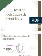 Biosíntesis de nucleótidos de pirimidinas