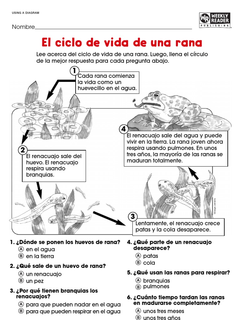 Contemporáneo Rana Respuestas Anatomía Hoja De Cálculo Externa ...