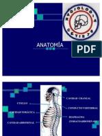 radiologia e imagen