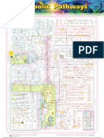 Chart of Metabolic Pathways