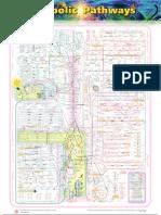 Chart of Metabolic Pathways
