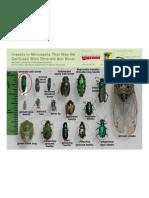 Bugs That Look Like Emerald Ash Borer