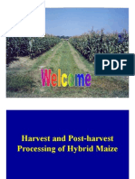 Processing of Maize SSA [Compatibility Mode]