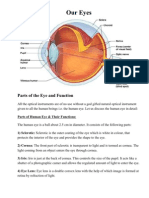 Parts of the Eye and Function