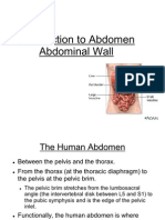 Abdomen Introduction