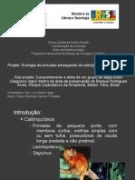_Apresentação1_Paulo