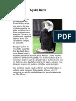 Aves en América en peligro de extinción