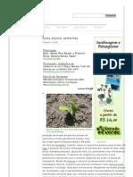 Como Plantar Sementes _ Jardineiro