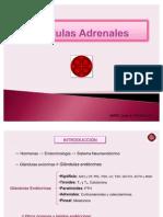 Glándulas Adrenales