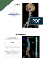 Médula espinal 2011