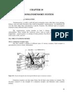 Ch10 So Ma to Sensory System