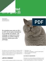 12 Obesidad en Gato