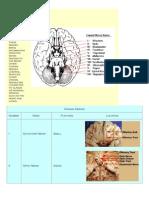 Cranial 1