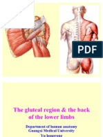 The gluteal region & the back of lower limbs