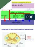 Control Nervioso Sistema Motor