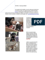 Apra, adopciones de perros en cipolletti