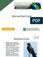 M6 L6 Bird&Plant Cards