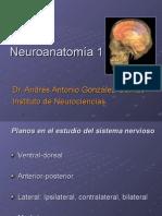 Neuroanatomía. Dr. Andrés González Garrido
