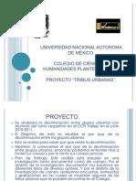 Proyecto Tribus Urbaanass....