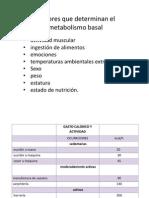 Factores Metabolismo Basal
