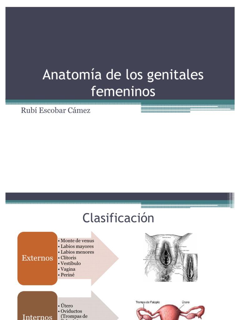 Anatomía de los genitales femeninos