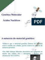 Genética molecular - FEPECS 11 e 12