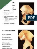 anatomia_lumbopelvica_2