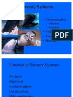Sensory Systems Lecture Whales and Seals 11 Slides.