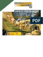 CLAVES DE LA EVOLUCIÓN HUMANA