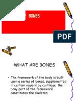 Anatomy of Bones