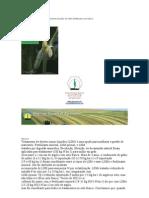 Exportação de nutrientes e rendimento de grãos de milho fertilizadas com Raw e