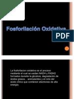 fosforilacion_oxidativa