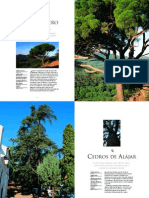 Pino y Cedros de Alájar (Árboles Monument Ales de España III)