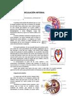 Tema14  Circulación Arterial- Embrio