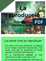 reproducción 3º