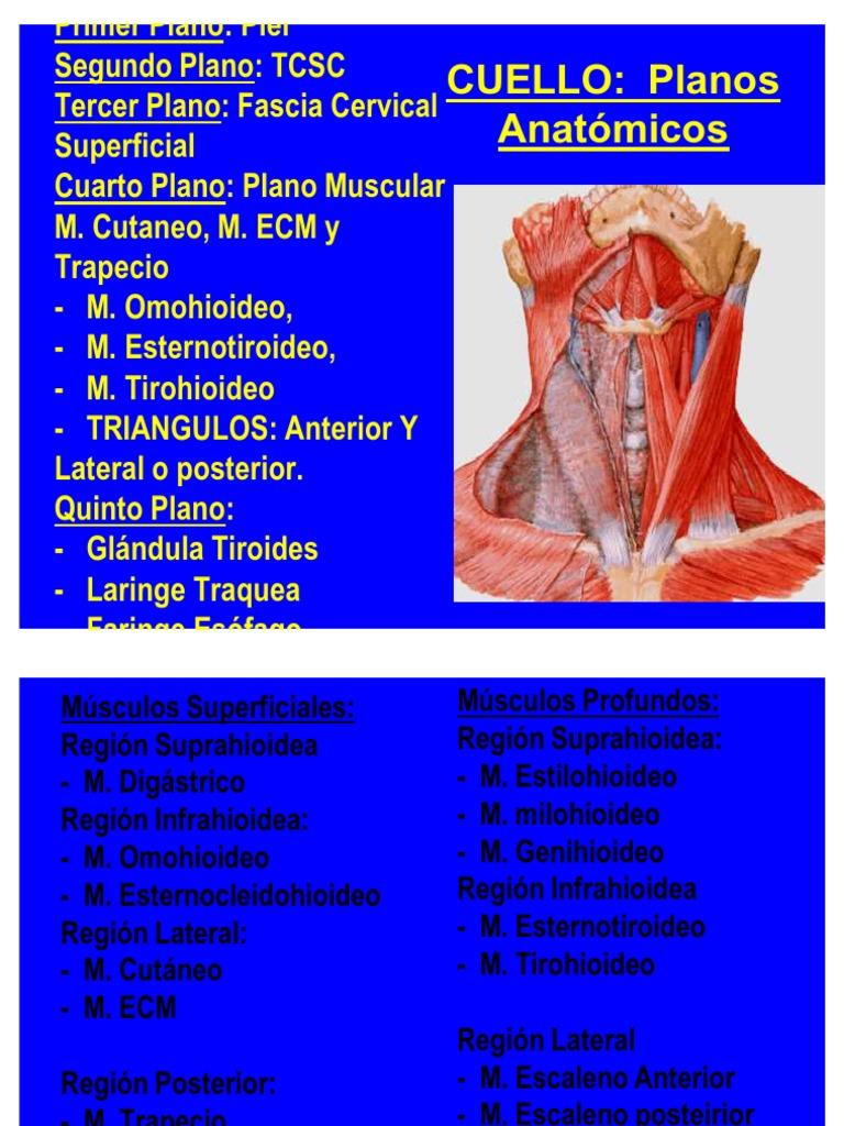 CUELLO TRIÁNGULOS version 7.1 fotos 4