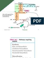 Vía-Pentosa-Fosfato