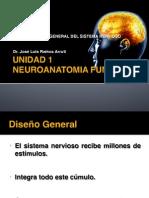 1.1 Panorama Del Sistema Nervioso