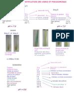 LES MILIEUX Vibrio Pseudo.ppt22