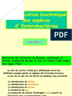 Enterobactérie Final