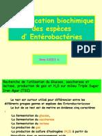 Enterobactérie Final