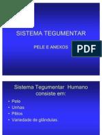 SISTEMA TEGUMENTAR2