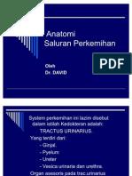 Anatomi Sistem Perkemihan