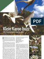 Klein Karoo Buzz