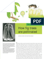 How Fig Trees Are Pollinated