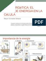 2-2011Bioenergética[1]