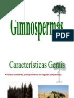 Gimnospermas - Aula 7