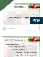 Cafe Agosto 16